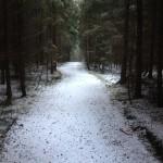 las w Istebnej zima