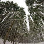 Las zimą w Istebnej