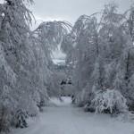 ośnieżone drzewa w lesie w Istebnej