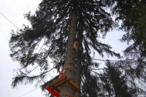 Drzewo wspinaczkowe w Istebnej