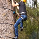 drzewo-wspinaczkowe-base-camp