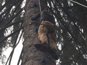 Drzewo wspinaczkowe w Parku lInowym w Istebnej