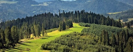 Wyjazdy integracyjne w góry – dlaczego warto wybrać firmowy wyjazd w góry?